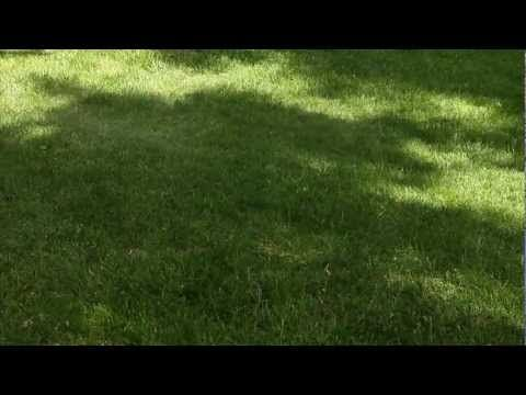 How To Reseed A Lawn | Reseeding Lawn ASK AGRONOTEC