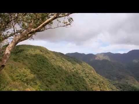 Adopta una hectárea - Salvanatura - YouTube