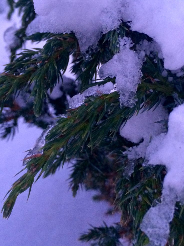 Зимний чудесный день😍👏❄️❄️