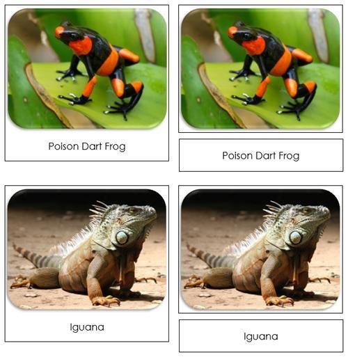 Rainforest Safari Toob Cards - printable cards by Montessori Print Shop