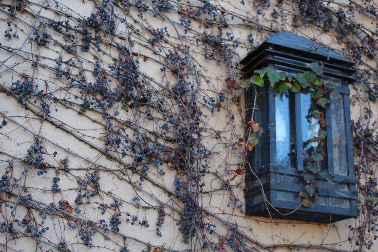 Se le llama planta de guía  a toda planta que posee tallos elongados y delgados, que no se mantiene erguida por sí misma, y que no se engrosa de forma diferencial. Necesitan un soporte para encaramarse: otra planta, un muro, un peñasco, etc.