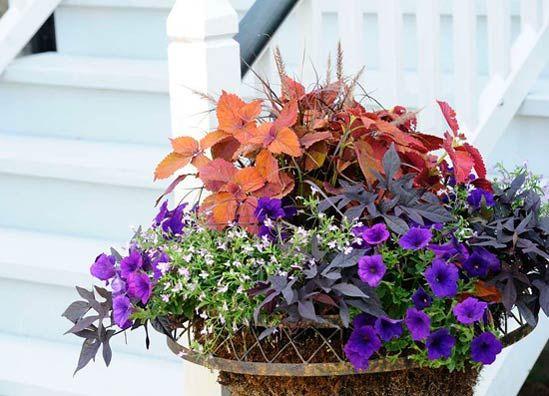 P. Allen Smiths: Five Tips for Container Gardens | Allen's Blog - P. Allen Smith Garden Home