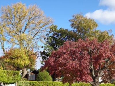 The colours of autumn in Australia's spa country: story on InTheKnowTraveler.com