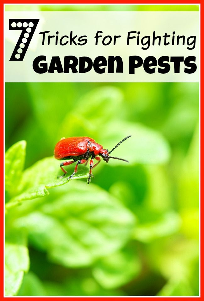 Best 25+ Garden Pests Ideas On Pinterest