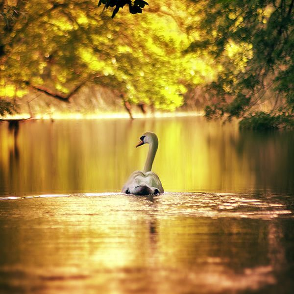 stunning photography - Google Search