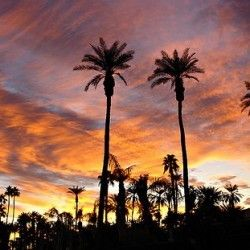 Gay Palm Springs Guide - Gay Bars & Clubs, Hotels, Reviews and Maps