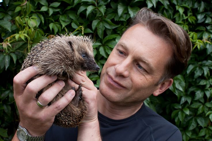 chris packham looking at a hedgehog quizzically