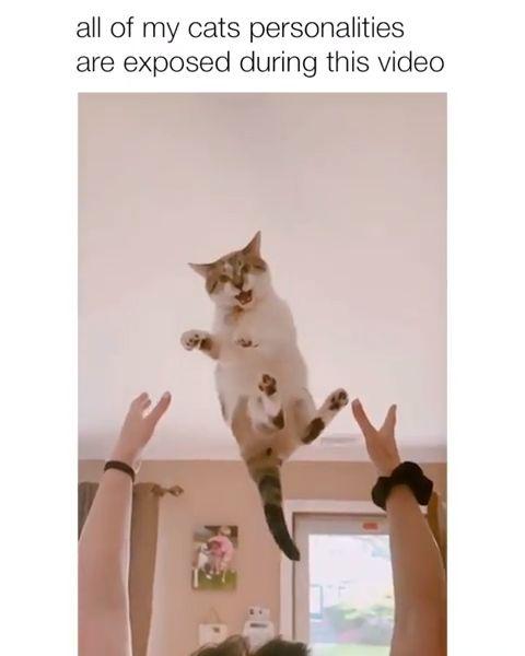 """Die zweite Katze ist wie """"Nun … das ist jetzt mein Leben …  – Katzis :D"""