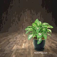 BEDROOM PLANTS THAT HELP YOU SLEEP