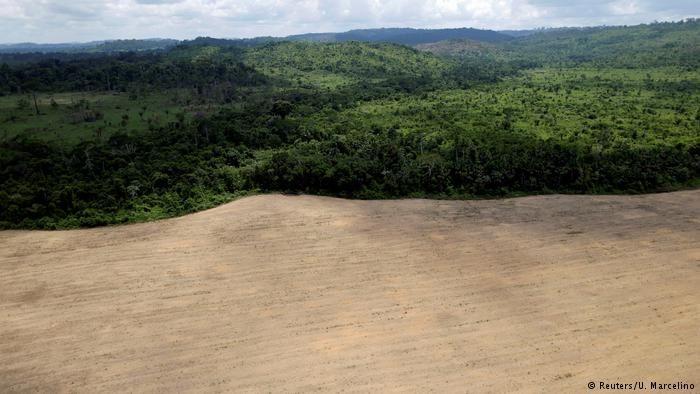 Amazônia pode entrar em ciclo de desmatamento e seca diz estudo