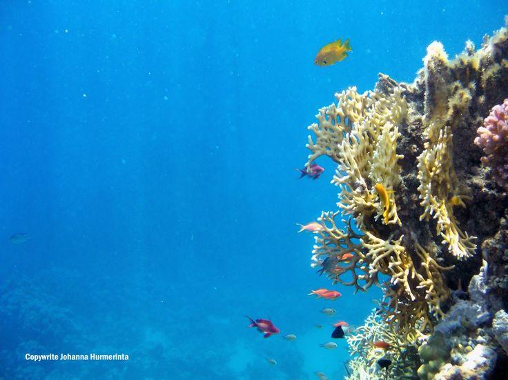 Punainenmeri on kaunis ja hiljainen. Värikäs ja eksoottinen.