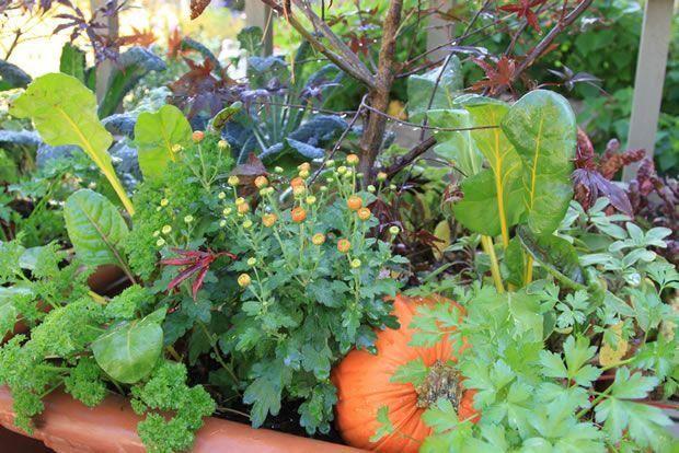 4 razones para combinar hortalizas y flores