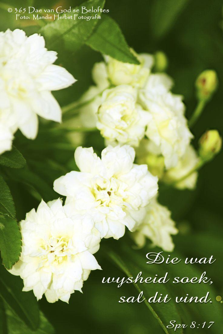 Dag 27 Bybelvers: Spreuke 8:17 Die wat wysheid soek, sal dit vind.