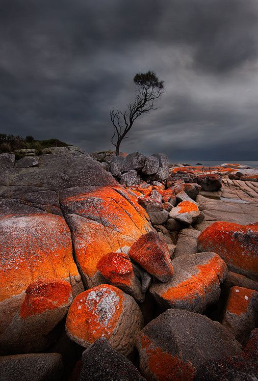 Rocks of Fire - The Lone tree of Tasmania!! The Bay of Fire on Tasmania's east coast is simply a stunning place to explore. This rich red lichen made for a great contrast with the dull gloomy sunrise.