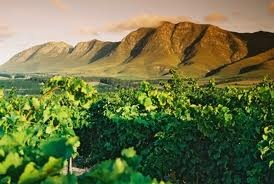 Hemel-en-Aarde Valley tucked into the folds of the Glen Vauloch Mountains on the outskirts of Hermanus, lies the picturesque Hemel-en-Aarde Valley. It is here that wine lovers can treat themselves to a unique wine tour among some of the southernmost vineyards in Africa, with only the Cape Agulhas vineyards being further south.  Bouchard Finlayson estate is situated in the Hemel-en-Aarde Valley 6km from the Sandbaai intersection of the R43 and R320 roads.