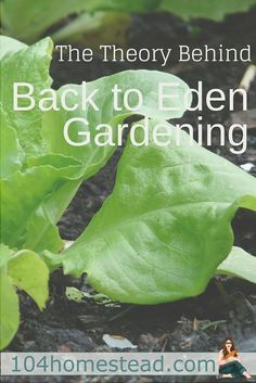 The concept behind Back to Eden gardening is to cover the soil in the same way nature does so that the soil is not exposed to the harsh elements of sun and wind.