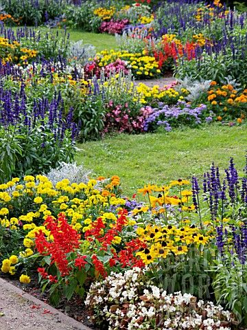 Repetition of rudbeckia, salvia, tagetes and marigold to create cohesion in  long border.
