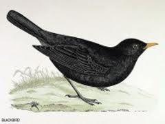 Blackbird tattoo idea.