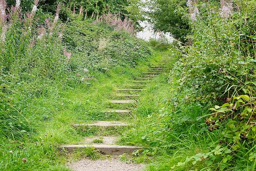 Overgrown Steps, Bentley Haye LNR
