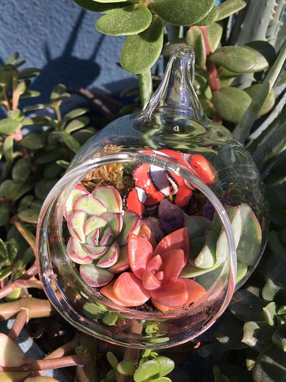 Clown Fish Hand Blown Glass Terrarium Ornament