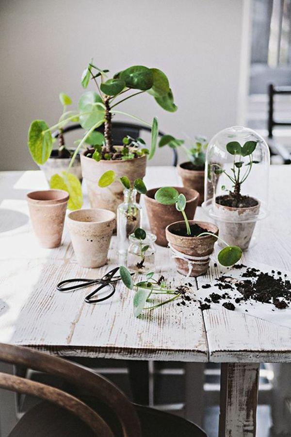 25+ Best Ideas About Zimmerpflanzen Pflege On Pinterest ... Grune Zimmer Pflanzen Schoner Indoor Garten