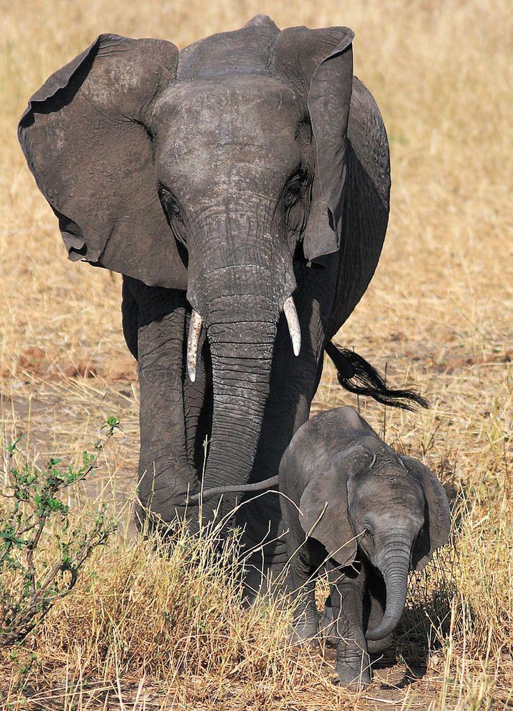 elephant xxx cartoon ellies