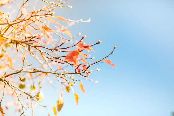 Colourful Autumn leaves in sunny Canberra. relaxing days by the lake! | ACT Australia  [©Tiny Giraffe]