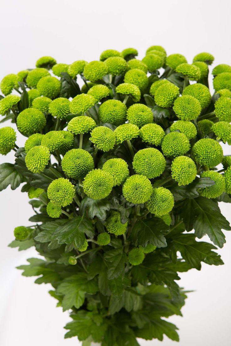 цветы зеленого цвета в саду фото интернете возможно