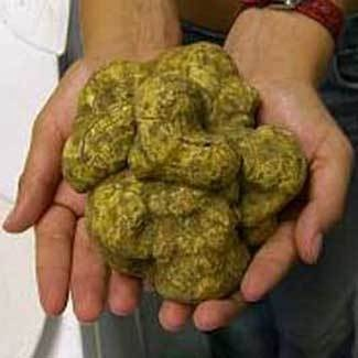 Fresh Italian White Truffles 4 ounce ( White Alba Truffle)  (Tuber magnatum)