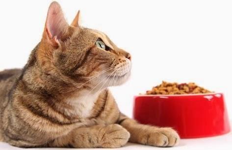 Qual a melhor ração para gatos. Quando adquirimos um felino pela primeira vez existem várias dúvidas sobre a sua alimentação, os gatos são bem diferentes dos cães e como tal têm carências diferentes no organismo. Com as prateleiras ...