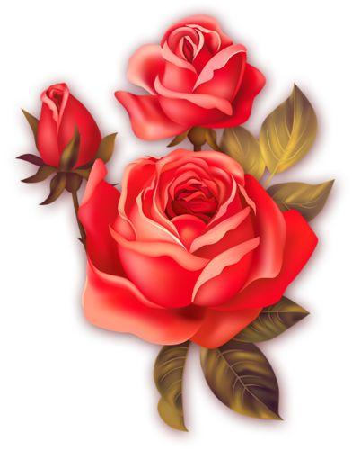 красивые цветочки 2 | Розы  Цветочки Розы