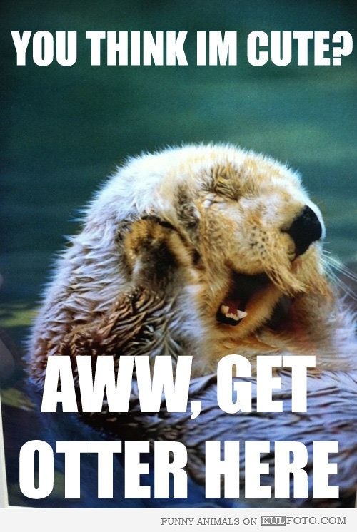 Otterly adorable. awwwww this just made me smile :3 soooo cute.