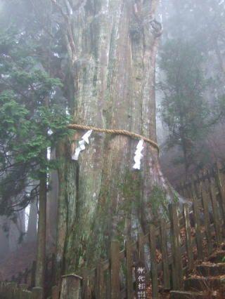熊野 奈良 十津川村 玉置神社 大杉