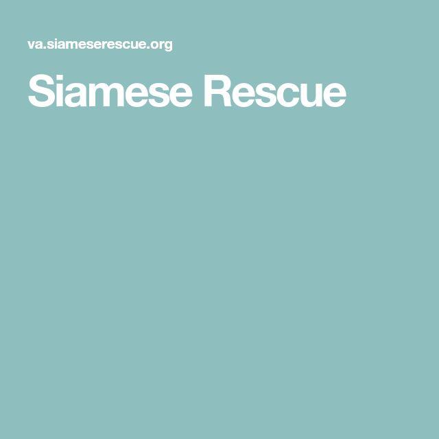 Siamese Rescue