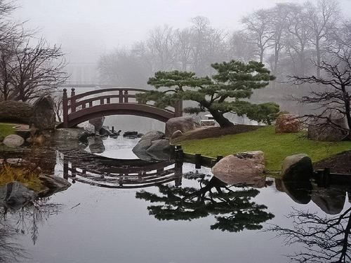 beautiful Japanese garden / horticulture