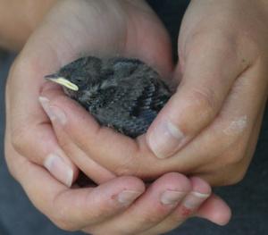 Dag 13 van 2555 dagen; één zwaluw maakt nog geen zomer  http://dagboekvoorhetleven.wordpress.com/2012/04/27/dag-12-van-2555-dagen-een-zwaluw-maakt-nog-geen-zomer/