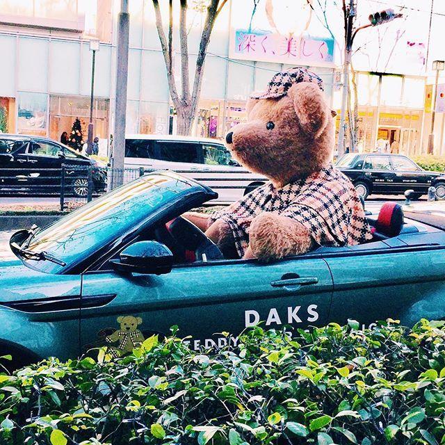週末picです 表参道で くまさん発見❣️ #daks#daksテディベアフォトコンテスト #ダッフィーじゃない#くまさん#ぬい撮り#おしゃれさんと繋がりたい#おしゃれ#休日#表参道#路駐#テディベア #かわいい