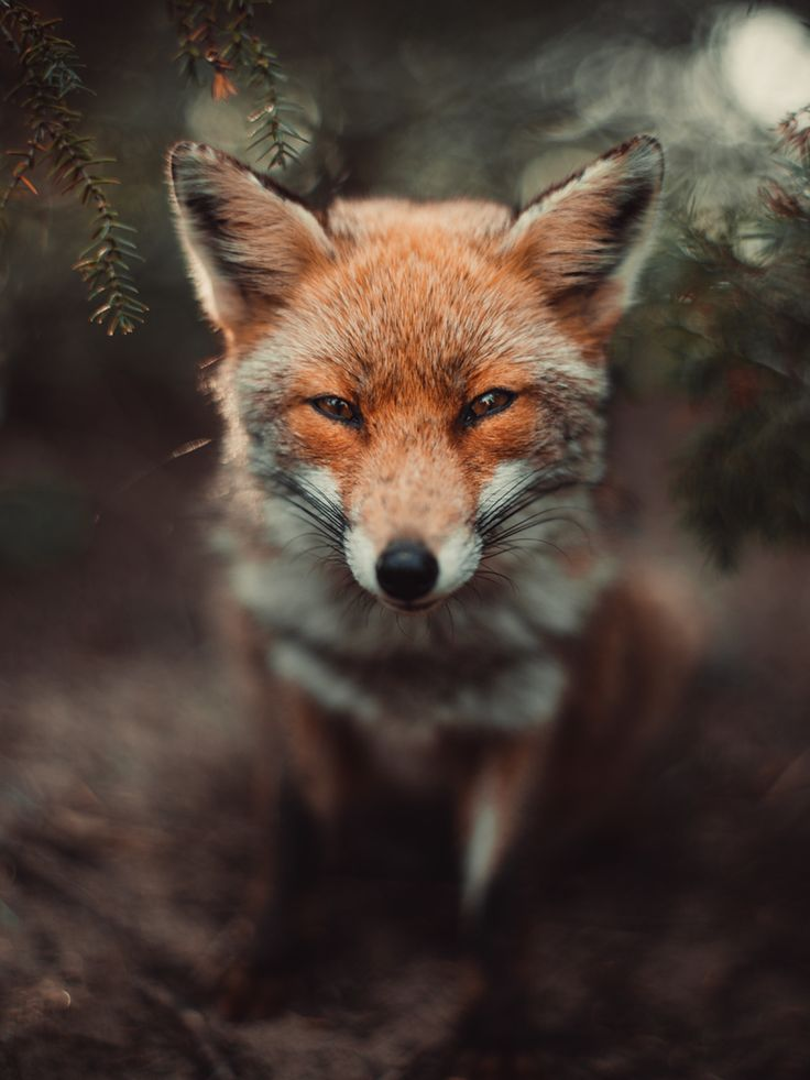 Bokeh Fox - Met my little friend while i was hiking with friends