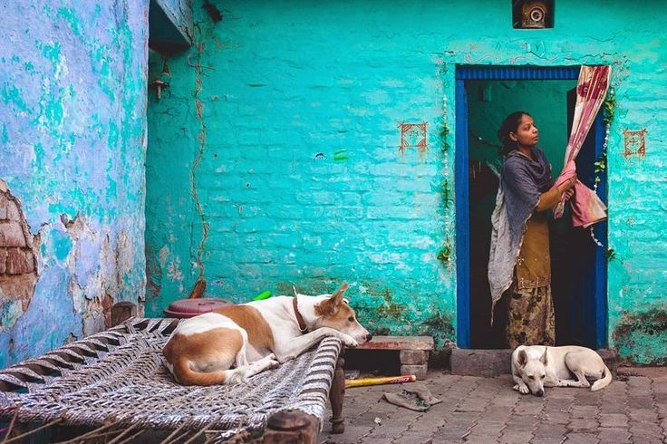 New Delhi India.  #india #documentary #people #streetphotography #dogs #home #traveldiary #turquoise #dogsofinstagram #doglovers #resourcemag #reportagespotlight #burnmagazine #afar #aov #passionpassport #canon_photos #canonasia #traveltheworld #indiagram #indiapictures #traveladdict #indianphotography #indiaphotoproject #natgeotravel #natgeoindia #_soi #indiaphotosociety #doglover #everybody_street