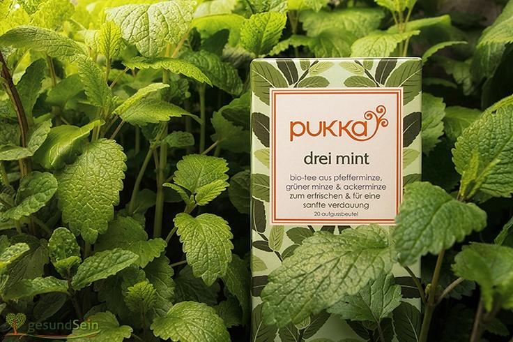 """Es grünt so #grün - Wir haben den leckeren #Pukka #Tee """"Drei Minze"""" in die Minze (gut, auch in die Zitronenmelisse) gesteckt. Gut versteckt, oder? -------- Green as #green can be! On this pin the fantastique Pukka tea """"three mint"""" is trying to hide in the mint-bush (and for bafflement - also behind some sweet balm leaves) Tasty! :-)"""