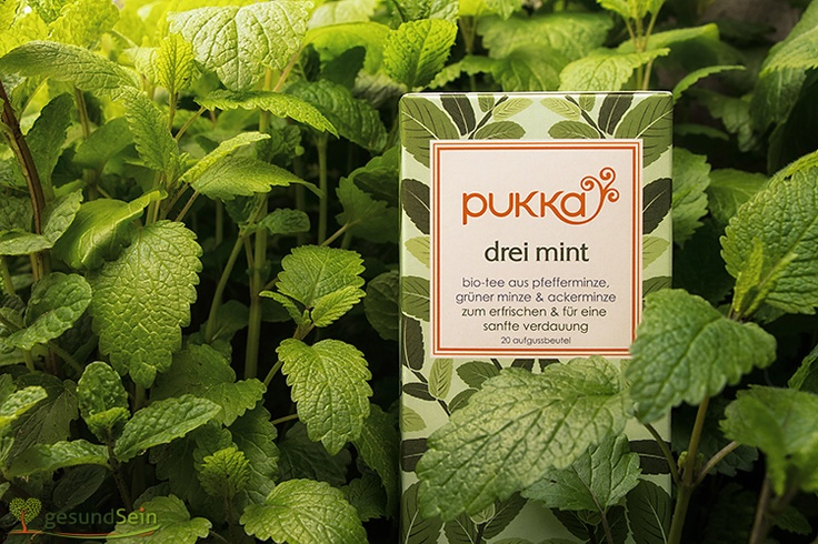 "Es grünt so #grün - Wir haben den leckeren #Pukka #Tee ""Drei Minze"" in die Minze (gut, auch in die Zitronenmelisse) gesteckt. Gut versteckt, oder? -------- Green as #green can be! On this pin the fantastique Pukka tea ""three mint"" is trying to hide in the mint-bush (and for bafflement - also behind some sweet balm leaves) Tasty! :-)"