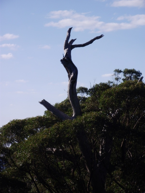 Interesting tree contortion - Valley of the Giants, South West WA, Denmark.