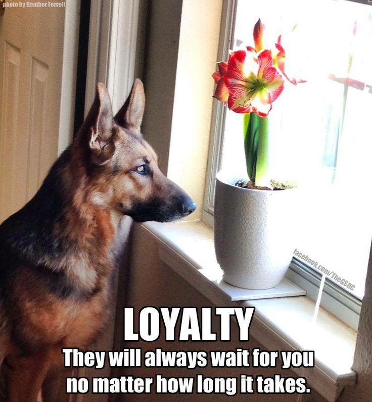 Loyalty Deutsch