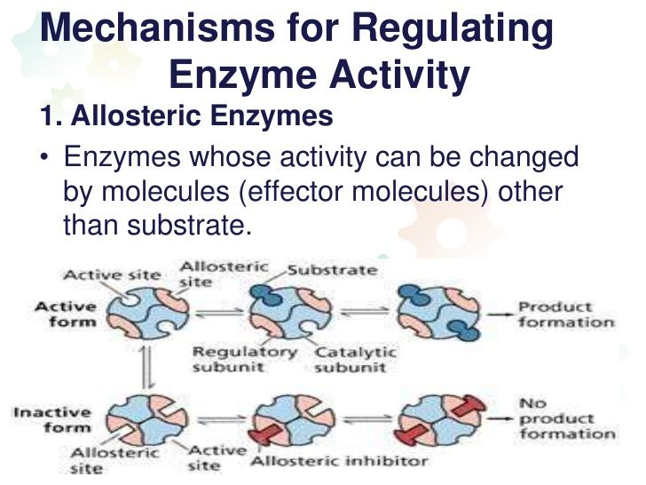 Mechanisms for Regulating Enzyme Activity1. Allosteric Enzymes• Enzymes whose activity can be changed by molecules (e...