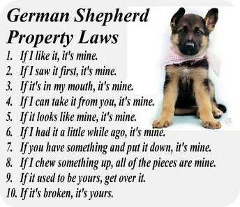 German Shepherd property laws