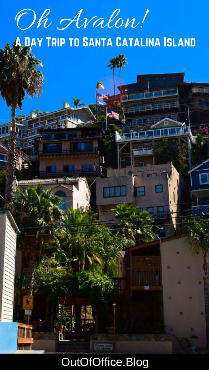 Avalon is set on a seaside cliff full of colorful homes with a harbor of anchored boats below. It's clear blue water is full of colorful fish, dolphin, seals and leopard sharks. The climate is sunny and 75° with a laid-back beach vibe. #catalina #avalon #california #travel