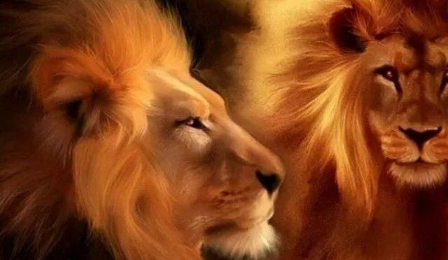 Ready for a Download? We are All About to Enter the Lion's Gate =i LOVE LEO's! they r  easy to get along with !