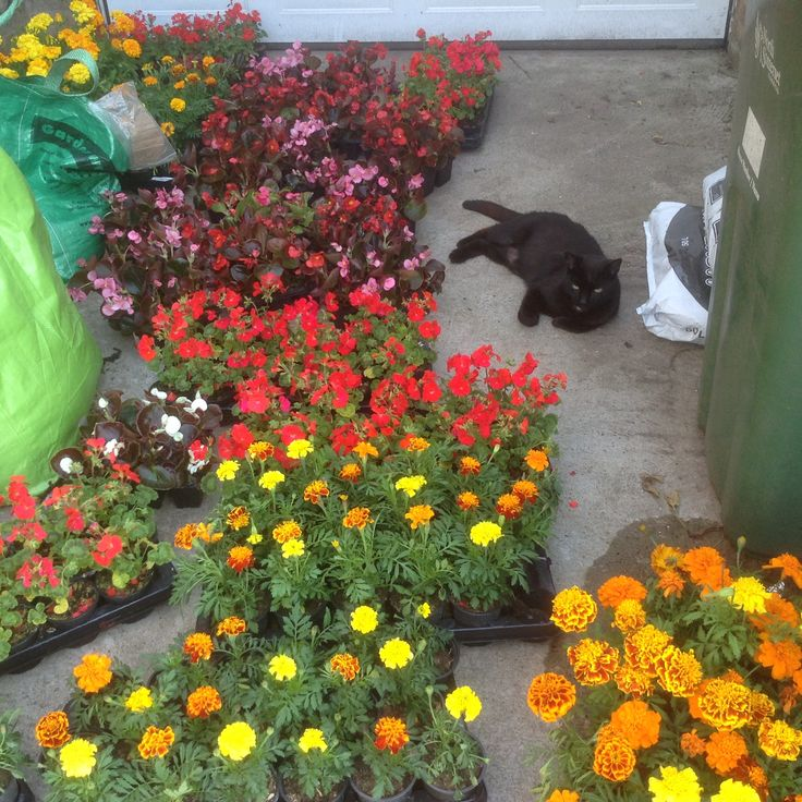 300 annuals and my car Wilf.