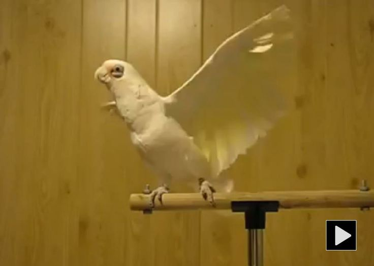 38 best images about funny bird videos on pinterest