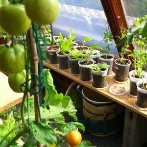 17 best images about indoor herb veg gardens on pinterest for Indoor vegetable gardening beginner